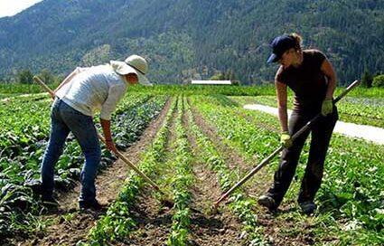 Çiftlik Elemanı - Kırklareli