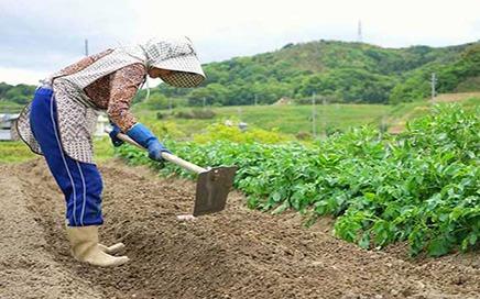 Çiftlik Elemanı İş İlanları - Çatalca