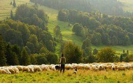 Tekirdağ İnek Çiftliğine Bakıcı Aile İş İlanları